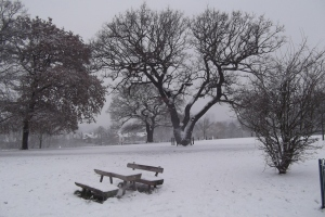 Snow covered Oak tree and Timberplay bench at Mountsfield Park