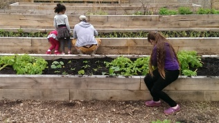 Mountsfield Park Community Garden