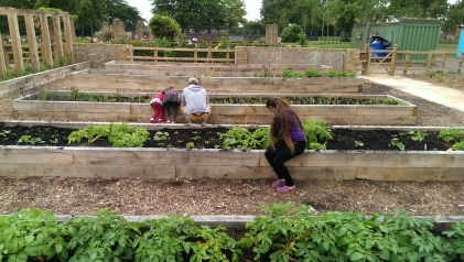 The raised vegetable beds at the back in this photo need filling with compost - we need your help!