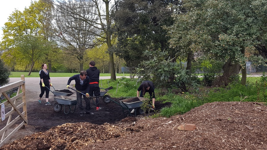 @GoodGym and Friends of Mountsfield Park volunteers shoveling and barrowing compost to our new community garden pumpkin patch.