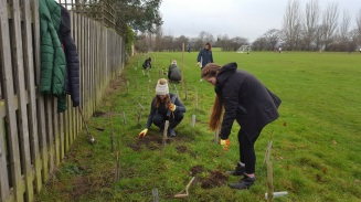 D of E Award volunteers from Thomas Tallis School planting trees at Mountsfield Park, Catford SE6