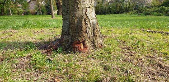 Mountsfield Park April 2019 - fresh and historic careless strimmer damage
