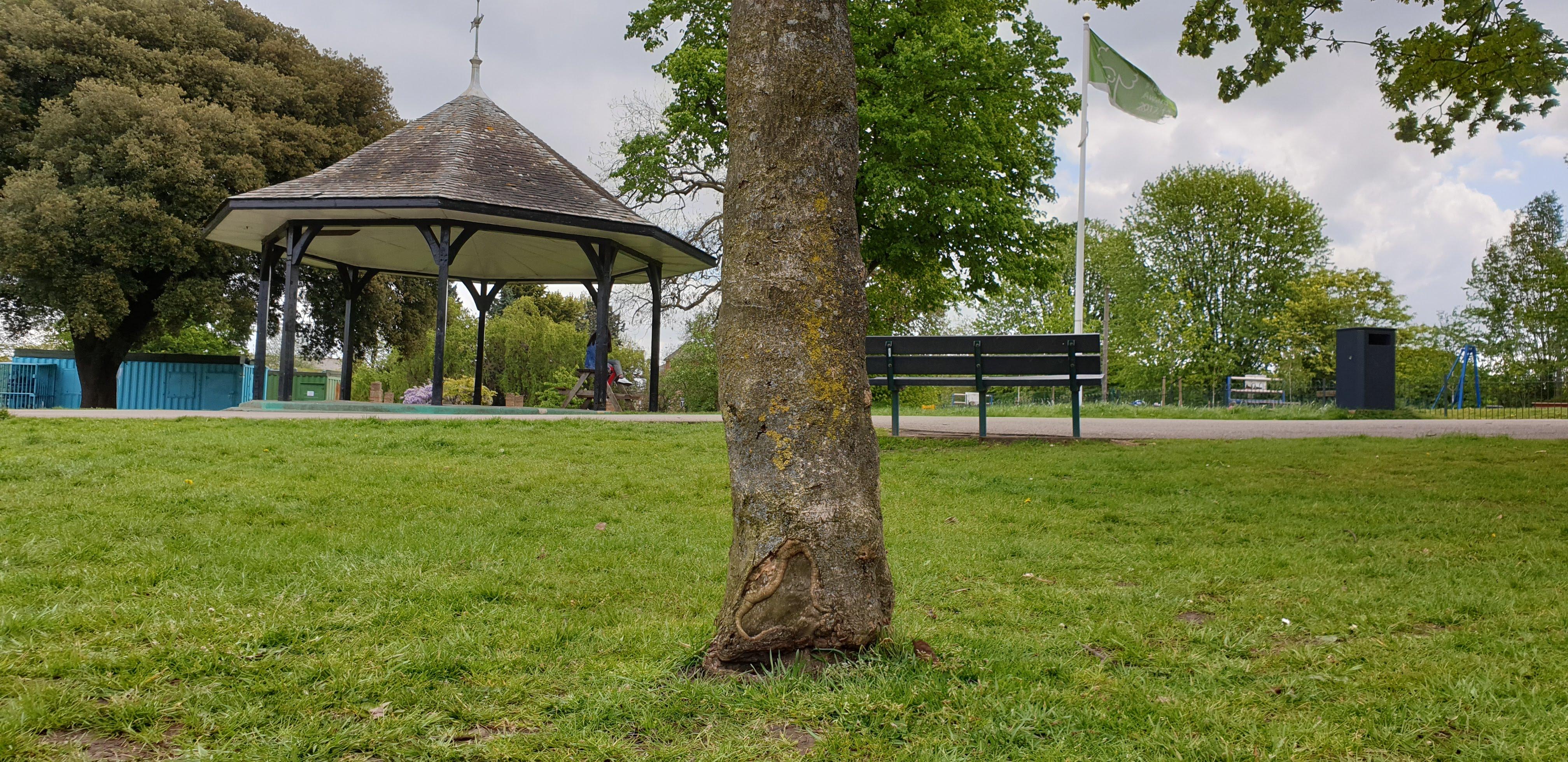 Historic tree stem strimmer damage at Mountsfield Park