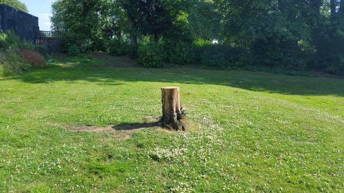 Tree stump near Mountsfield Park community garden - premature death due to mower damage 2017. Contractor mower blades set much too low within proximity to tree stem, causing injury to surface roots and entry for harmful fungal infection.