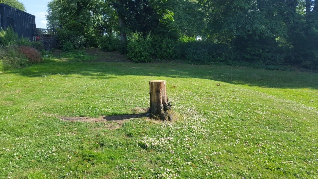 Tree stump at Mountsfield Park - dead because of mower damage