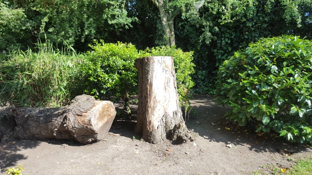 Dead mature tree near Mountsfield Park community garden