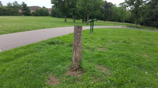 Dead avenue tree at Mountsfield Park